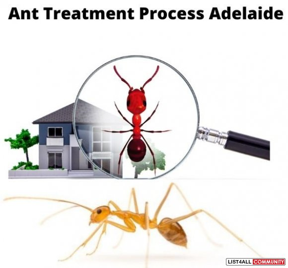 Ant Control Adelaide